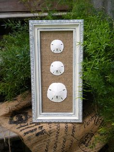 Cottage Chic Sand Dollar Wall Art, Sea Shell Art, Sea Shells Home Decor