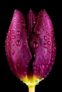 Purple by Mark Johnson, via 500px