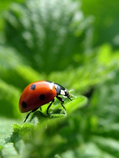 There will be ladybugs in the garden.