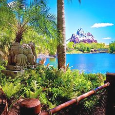 Animal Kingdom, WDW.