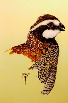 "Northern Bobwhite Quail"" paper collage - Sök på Google"