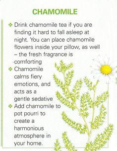 Growing Medicinal Herbs Page 4 Healing Herbs, Medicinal Plants, Natural Healing, Natural Herbs, Magic Herbs, Herbal Magic, Herbal Remedies, Health Remedies, Natural Remedies