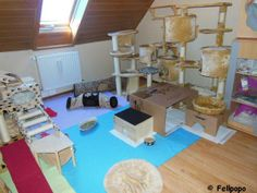 wow- My ratties would love this space!!....Now all I have to do is win the lottery !