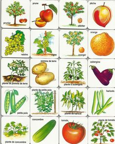 Free printable fruits and vegetables cards.