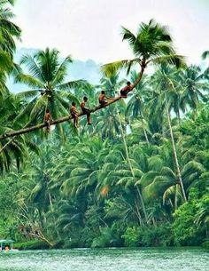 Incredible India - Google+ - Kumarakom, Kerala, #India #Nature  #Travel