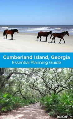 Visit Cumberland Island National Seashore, one of the most beautiful and romantic places on the planet, not to mention home to a rich estuarine and maritime forest environment. Plan your coastal Georgia getaway with this helpful guide. Vacation Places, Vacation Spots, Places To Travel, Places To Visit, Vacation Ideas, Vacations, Weekend Trips, Day Trips, Cumberland Island Georgia