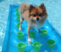 did someone say pool party???