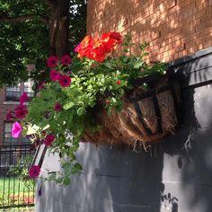 Embedded image permalinkSteven's Neighborhood flowers in Summerland.