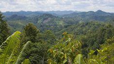 'Presumed Extinct' Bird Is Found in Indonesia - EcoWatch Extinct Birds, Amazon Rainforest, Wildlife Conservation, Big Tree, All Gods Creatures, Borneo, Color Of Life, Bird Watching, Habitats