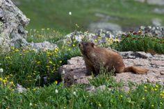 Handies Peak Wilderness, BLM Colorado, by Bob Wick, BLM