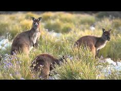 Kangaroo Island, South Australia - an insider's guide