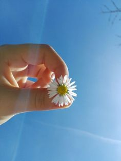 Mint Wallpaper, Sad Wallpaper, Trendy Wallpaper, Tropical Wallpaper, Nature Wallpaper, Instagram Captions For Selfies, Profile Pictures Instagram, Love Rose Flower, Beautiful Flowers