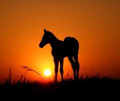horse silhouette - Αναζήτηση Google