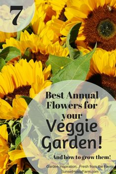Using the right annual plants, like sunflowers, strategically will not only bring the garden back to life visually but can help your veggies stay healthy and pest free. Here are our top seven annual flowers to grow to benefit your vegetable garden. Common Garden Plants, Garden Pests, Growing Flowers, Planting Flowers, Growing Vegetables At Home, Canning Jar Labels, Vegetable Garden Tips, Climbing Vines, Annual Flowers