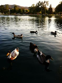 Duck Pond Temecula, via Flickr.