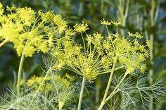 9 Little-known Herbs | Gardening | Birds & Blooms Magazine