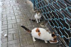 FOTOĞRAF : TAHİRE -İSTANBUL -BEŞİKTAŞ ÇARŞI-18 ŞUBAT 2015-SAAT 10.00