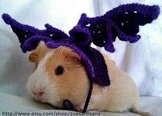 Crochet bat costume for guinea pigs or small pets www.etsy.com/shop/zoesartisans