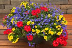 Container Recipe for 12-inch pot (1 each in 4-inch pots): Callie Yellow calibrachoa, Techno Heat Dark Blue lobelia and Lanai Scarlet with Eye verbena.