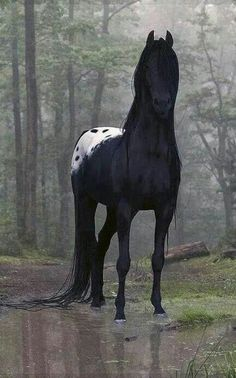 This may be the most beautiful horse I've ever seen