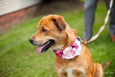 DIY Flower Dog Collar for Weddings from Sublime Birdy