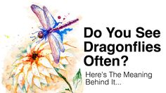 Pay attention to the animals and signs around you, as they carry important messages. If you see dragonflies often, here's what it means...