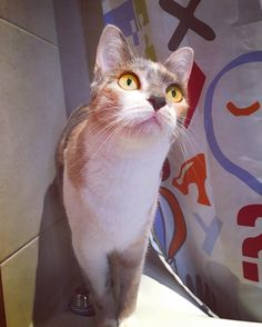 Una ducha? #cat #vidagatuna #catlady #beauty #gata #calico #ducha #tricolor #cats_of_instagram #catsofinstagram #eyes #magnificent_meowdels #awhdaily #cute #cutepetclub #pet #love #pic #pictures #picoftheday
