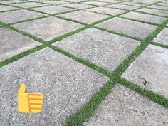 Seeding Grass Between Pavers at Stonecrest Manor by Amy Renea