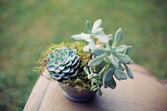 Blush Pink Outdoor Wedding)  pic of succulent arrangement centerpiece