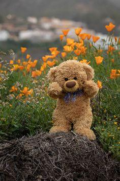 Tatty Teddy, Cute Baby Dolls, Cute Babies, Teddy Hermann, Teddy Day, Les Chakras, Teddy Bear Pictures, Love Bear, Bear Wallpaper
