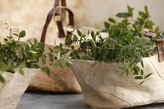 Baskets of olive branches. Repinned by www.mygrowingtraditions.com