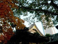 Shinjuku, Tokyo, buildings, foliage.