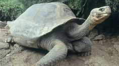 Giant turtle couple separates after 115 years together | CTV Montreal