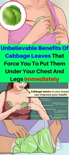 Unbelievable Benefits Of Cabbage Leaves That Force You To Put Them Under Your Chest And Legs Immediately – Healthy National