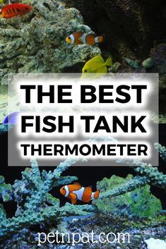 What is the best fish tank thermometer? Outside of tank or inside of tank? Find out what is the best aquarium thermometer here, and make sure you know that. Animals For Kids, Farm Animals, Animals And Pets, Animal Quotes, Animal Memes, Aquarium Design, Aquarium Ideas, Fish Tank Themes, Aquarium Fish Tank