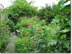 Permaculture food forest in Melbourne.