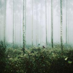 Film Photo By: Angex Lin Hasselblad 500 c/m, Kodak Portra 400 Flickr