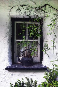 Photo Window, Irish Cottage by Steve Evans on Witch Cottage, Cozy Cottage, Irish Cottage Decor, Irish Decor, Cottage Homes, Cactus E Suculentas, Cottage Windows, Windows And Doors, Exterior Windows