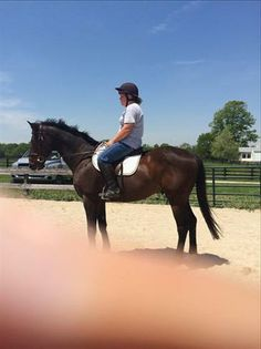 Thoroughbred Gelding For Sale in Kentucky