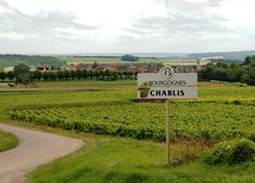 Learn about Chablis Wine