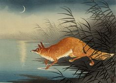 Ohara Koson. Fox in the Reeds, ca. 1930. a scent of wet fur amid white puffs of vapor hot springs at dawn