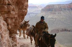 Grand Canyon mule trails