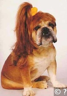 20 Sassy Dogs With Ponytails.