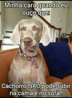 AQUI EH ASSIM! :) <3 #petmeupet #cachorro #amocachorro