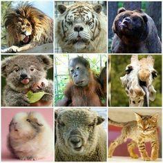 معلومة قد يجهلها الكثير : فكما يولد بعض البشر مصابين بمتلازمة داون  أيضا هناك بعض الحيوانات تولد مصابة بها   #معلومه