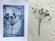 Cow Parsley, Collagraph, Dry Plants, Subtle Textures, Art Techniques, Emboss, Flower Prints, Printmaking, Art Projects