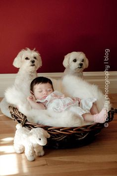 Our kids will have their pictures with our 4 legged babies.  Because infant pictures must include our pups!