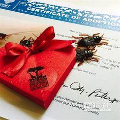 美情人節另類活動 用前情人姓名為蟑螂命名