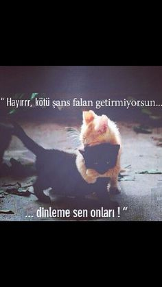 Acı Gerçekler Funny Images, Funny Photos, Animals And Pets, Cute Animals, Good Sentences, My Animal, Funny Kids, Kittens Cutest, Cool Words