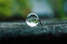 Hormiga moviendo una gota de rocio